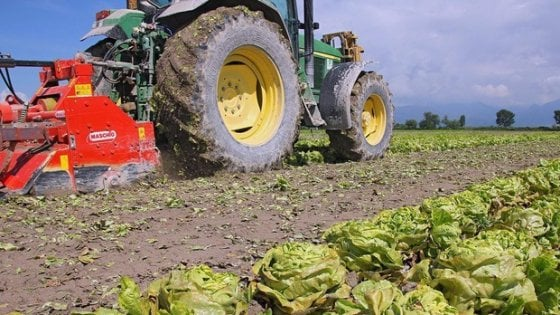 Legge sull 39 agricoltura biologica primo s alla camera for Si svolgono alla camera
