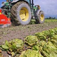 Legge sull'agricoltura biologica: primo sì alla Camera
