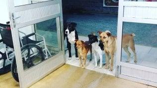 Il senzatetto viene ricoverato e i suoi cani lo aspettano per ore fuori dall'ospedale