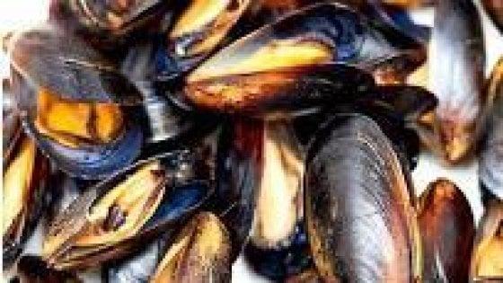 Cozze contaminate da vibrione colera, ritirato un lotto a Oristano