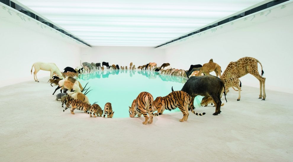 Tra arte e scienza, così è cambiata l'immagine degli animali nella storia