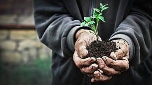 Agricoltura biodinamica: buona pratica o esoterismo?