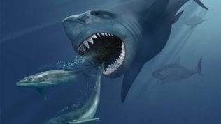 Lo squalo preistorico? Scomparso con l'esplosione di una supernova
