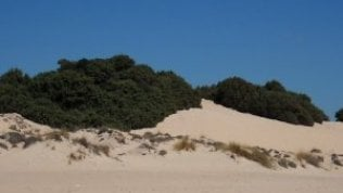 """Sardegna, gli ambientalisti comprano le dune di Chia: """"Battuta concorrenza degli arabi"""""""