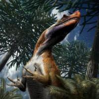 Saltriovenator, è italiano il più antico dei grandi predatori