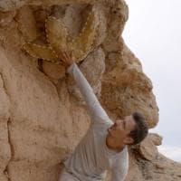 """""""Il cacciatore di dinosauri"""", il docufilm sul contrabbando di fossili"""