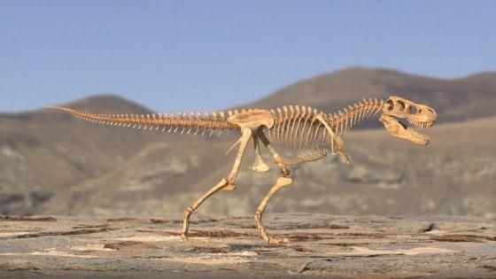 """""""Il cacciatore di dinosauri"""", la lotta ai contrabbandieri di fossili in un docufilm"""