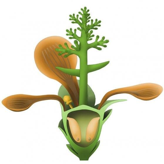 Il fiore più antico del mondo? E' sbocciato 174 milioni di anni fa