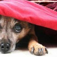 Cosa fare se il cane o il gatto sono scappati per via dei botti o se ne trovate uno in fuga