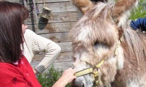 Carussin: dal porta a porta alle vendite all'estero, la storia di un asinello che ama il vino