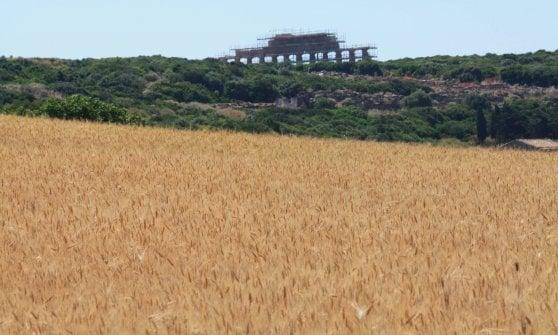 Grani antichi (e moderni): come ai tempi dei romani è la Sicilia la casa di Cerere