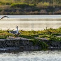 La natura della Sardegna nello sguardo di 20 fotografi
