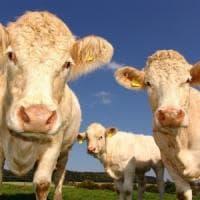 """""""Le etichette sul benessere animale sono ingannevoli"""", la denuncia degli animalisti"""