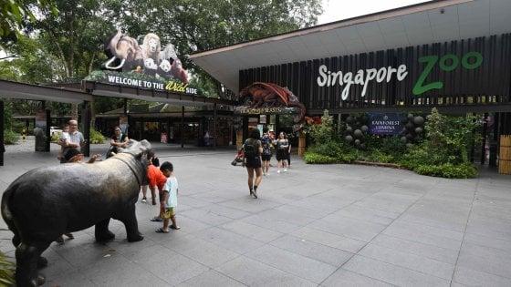 """Singapore, la giungla trasformata in parchi e zoo. Gli animalisti: """"Così togliamo habitat alla natura"""""""