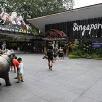 """Singapore, la giungla trasformata in parchi e zoo. Gli animalisti: """"Così togliamo habitat..."""