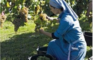 Nella vigna coltivata dalle suore nascono vini che sono un inno alla natura (e a Dio)