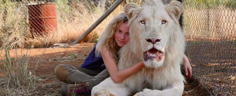 Aspettando il 'Il re leone' digitale, quello bianco di Mia ruggisce (e gioca) per davvero