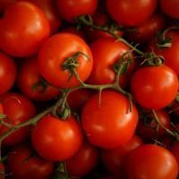 Ingegneria genetica, arrivano i pomodori all'arrabbiata