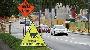 Singapore, giungla diventa zoo