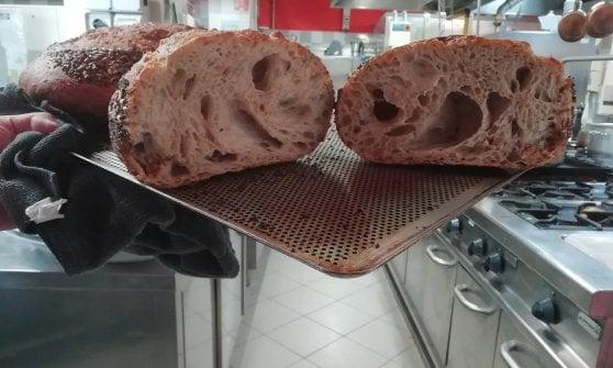 Udine, quel pane nato per far rivivere gli alberi spazzati via dalla bufera