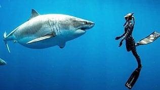 """La donna che accarezza lo squalo:""""È il più grande al mondo"""""""