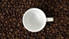 Caffè, il 60% delle specie selvatiche rischia di scomparire