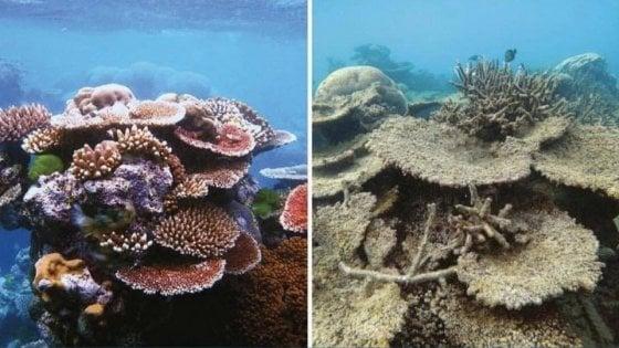 """""""Quanta natura abbiamo distrutto in 10 anni"""", #10yearschallenge guarda all'ambiente"""