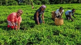 """Graziano da Silva:""""Investire nell'agricoltura offrirà ai giovani un'alternativa alla migrazione"""""""
