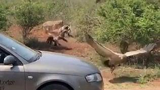 Turisti filmano gli avvoltoi: ma riprendono qualcosa di inatteso