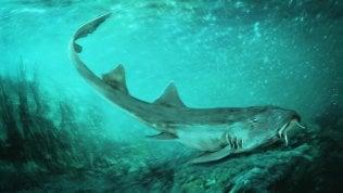 Il caso dello squalo preistorico trovato fra resti del T-Rex
