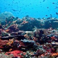La grande barriera corallina mostra segni di adattamento al clima