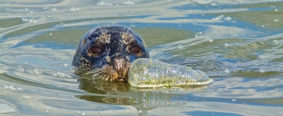 """L'ambasciatore anti-plastica: """"Dieci passi per salvare il mare"""""""