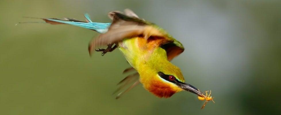 Così gli uccelli vedono colori e contorni che noi non vediamo