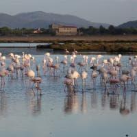 Giornata delle zone umide: alla scoperta di stagni e lagune
