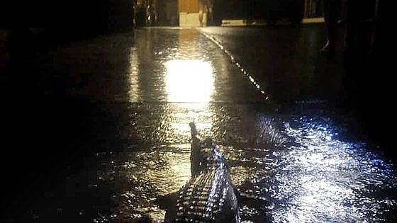 La città finisce sott'acqua, è allarme coccodrilli