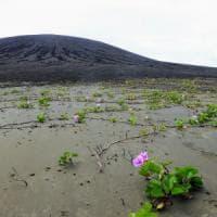 C'è vita sull'isola che non c'era: Hunga Tonga, un paradiso a rischio
