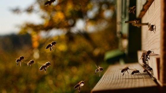 Anche le api sanno contare: lo dimostra l'esperimento matematico
