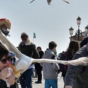 Venezia, gabbiani violenti: due turisti in ospedale