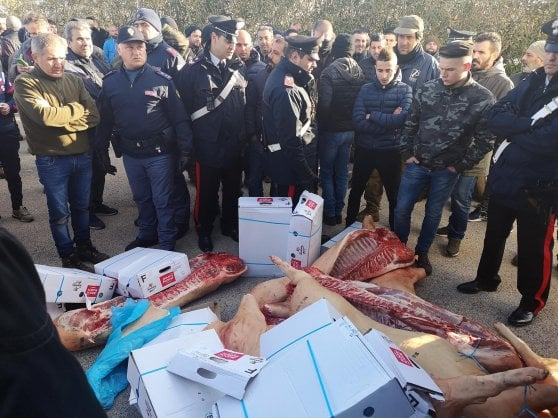 """Sardegna, la protesta dei pastori contro il prezzo del latte: """"Bloccheremo i seggi elettorali"""""""
