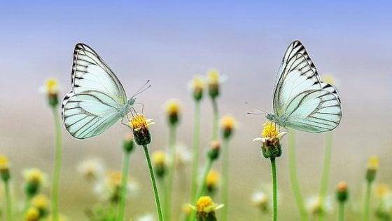 Popolazione insetti verso estinzione,natura rischia collasso - Animali