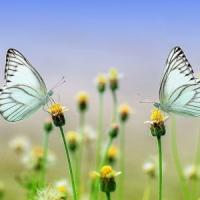 """""""Addio insetti, di questo passo si estingueranno entro un secolo"""""""
