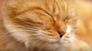 Festa nazionale del gatto: come e perché si festeggia il 17 febbraio
