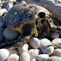 Tartarughe decapitate in Puglia: la denuncia del Wwf