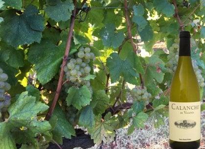 La Tuscia nel bicchiere: quello Chardonnay dei Calanchi