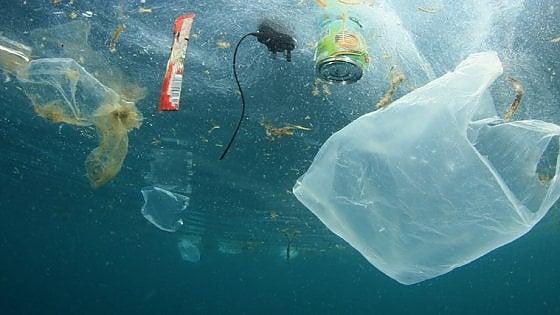 Quanto è profonda la plastica. Trovata nei pesci 11 km sotto alla superficie