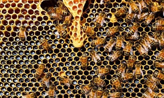 Miele senza più segreti: buono da mangiare e giusto per l'ambiente