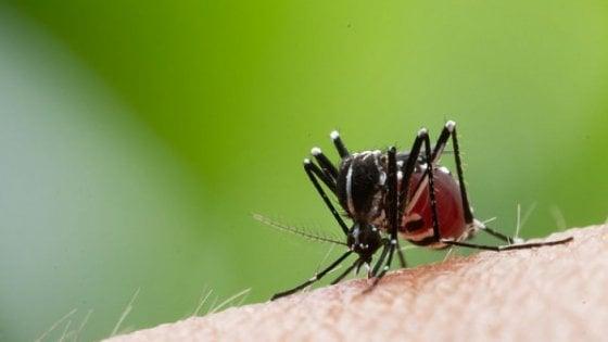 Attenzione, anche l'Italia sarà tra gli habitat ideali delle zanzare tropicali