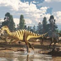Australia: scoperto il fossile di un nuovo dinosauro-canguro