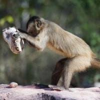 Animali: in molte specie esiste una vera e propria forma di cultura