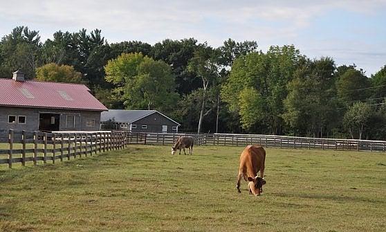 Vacanza in fattoria. Dall'Umbria agli States, la vacanza agreste fa tendenza